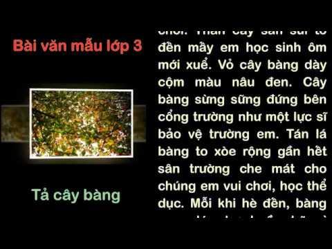 Видео: #beudon - Tả cây bàng - Văn mẫu lớp 3