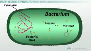 What is Bacteria ? Definition, Characteristics, Examples