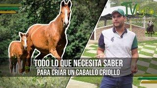 Todo lo que Necesita Saber para Criar un Caballo Criollo - TvAgro por Juan Gonzalo Angel