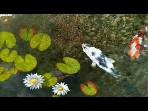 Koi fish screensaver preview youtube for Koi pond screensaver