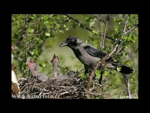 Ичнянский национальный природный парк Home Facebook