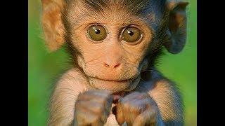Смешные обезьяны | Лучшая подборка видео приколов с обезьянками #3