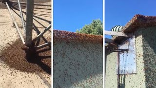 Mystery Swarm Of Ladybirds Take Over Tower