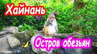 Остров обезьян. Хайнань. Китай | Nanwan monkey Island. Linshui. Hainan. China(Видео было снято во время путешествия по острову Хайнань, который Макс впервые посетил в марте 2014 года...., 2015-12-21T09:26:52.000Z)
