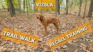 Trail Walk and Recall Training with a Vizsla Puppy