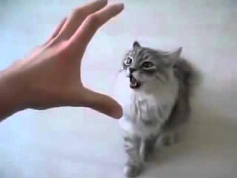 Смешной кот! Ещё раз так сделаешь получишь, прикол, юмор, смешно  Эти смешные животные