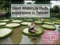 Giant WaterLily Pads in Taiwan experience-Factory worker in Taiwan Vlog