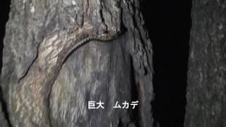 2016年7月5日 天気:晴れ 時々5mの風 場所:神戸市北区呑吐ダム周辺 日...