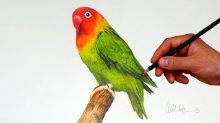 Drawing A Love Bird With Simple Colored Pencils |