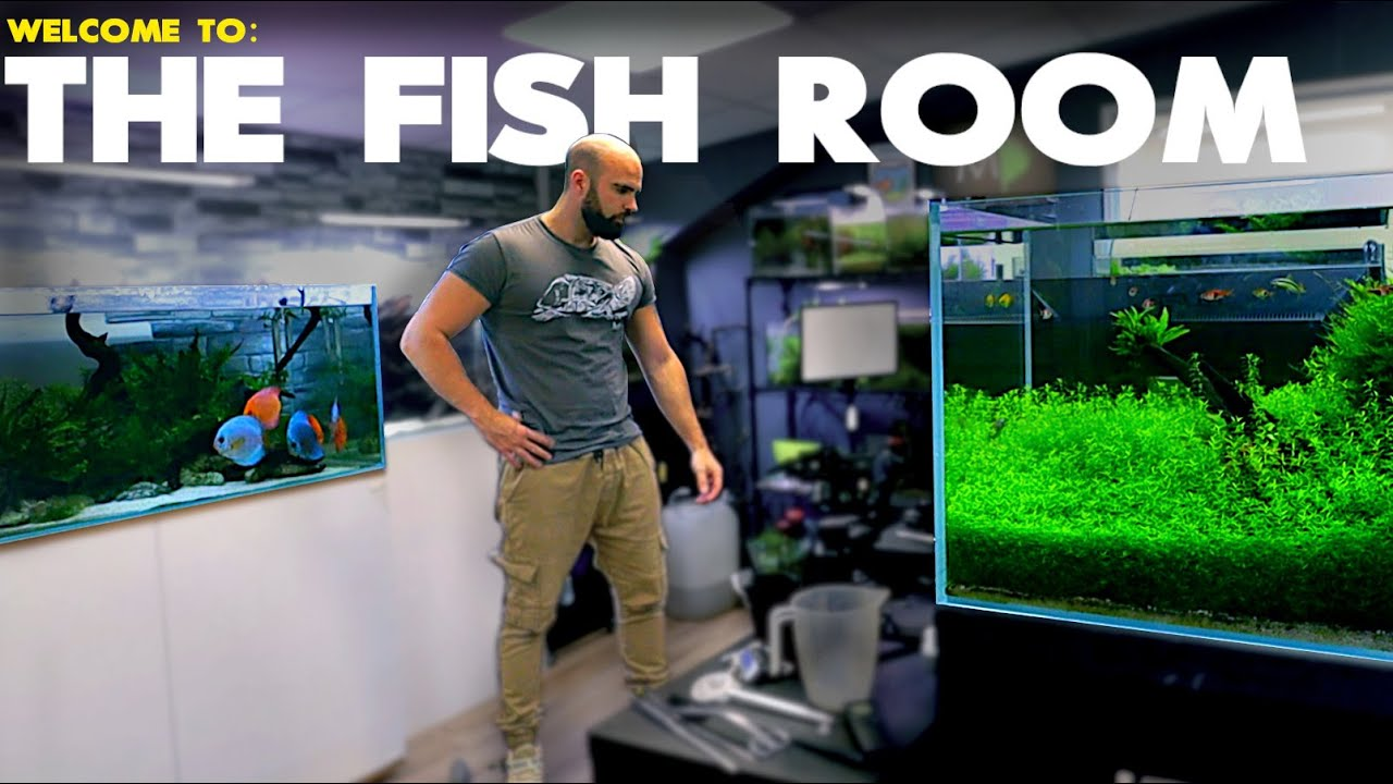 Welcome To The Fish Room | MD Fish Tanks