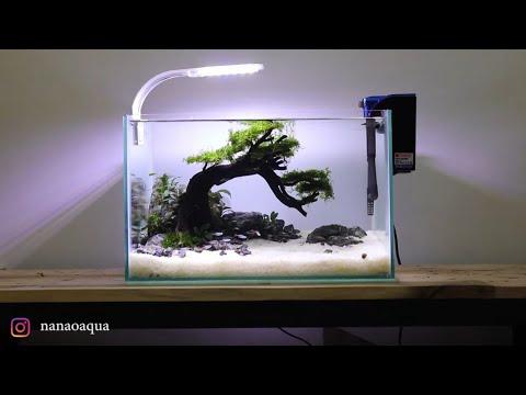 mini-bonsai-in-nano-aquascape