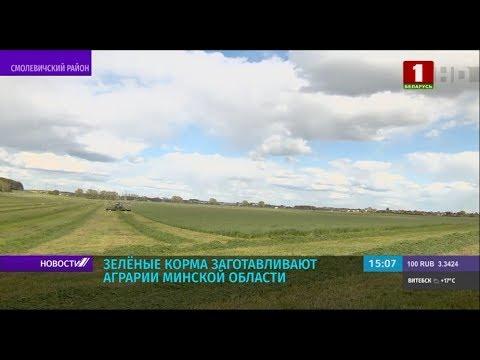 Раньше обычного заготовку зеленых кормов начали аграрии Минской области