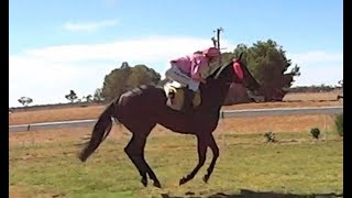 12 HOURS OF A HORSE GALLOPING SOUND EFFECT