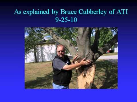Update on OARDC/Secrest Arboretum Tornado Damage Part 1 of 2