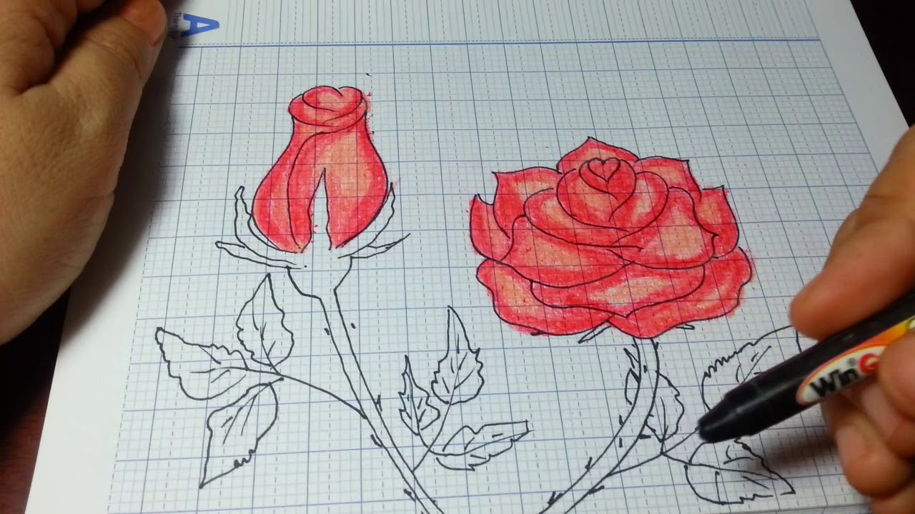 VẼ HOA HỒNG ĐƠN GIẢN NHẤT/How to Draw a Rose (and add color) Super EASY Realistic