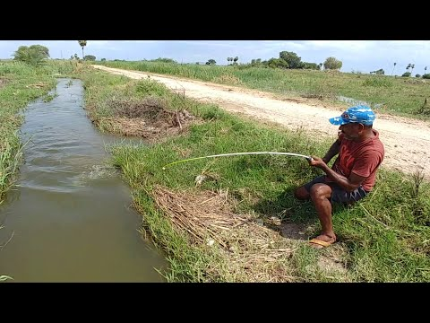 Fishing||incredible fishing video||Catching monster fish with single(big)hook||In flood water