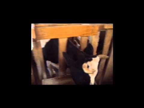 Video de Geo - 2° NOR - Bagozzi