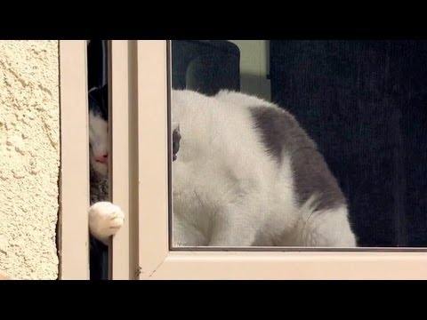 Kitty Escape Artist