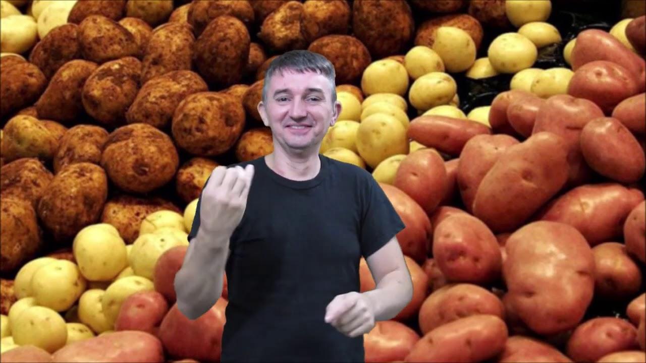 Откуда появился картофель и целебные свойства