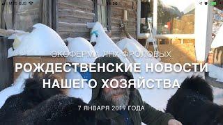 Рождественские новости - ЛПХ Фроловых (кролики, щенки тибетского мастифа и тибеты)