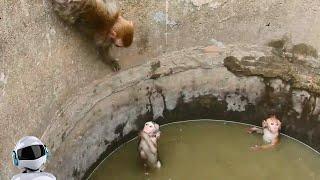 Матери в Деле / Как Самки Животных Защищают Детенышей