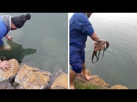 Man Catches Two Octopus With His Bare Hands