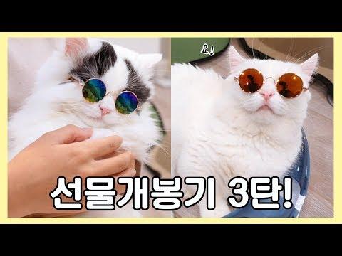 고양이 선글라스 쓰고 선물 개봉기 3탄!