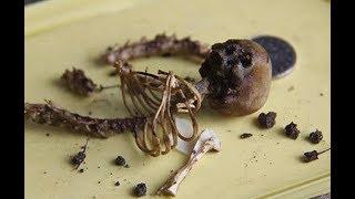 Археологи сделали шокирующую мир находку. Факты, заставляющие ученых поверить в существование гномов