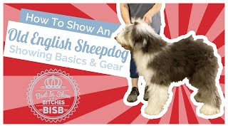 How to Show an Old English Sheepdog at a Dog Show