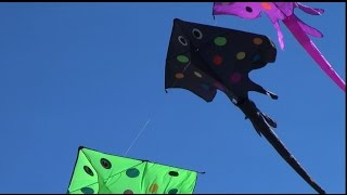 Stingray Kite Stack in Coalinga Thumbnail