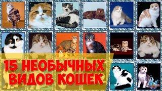 15 необычных видов кошек.
