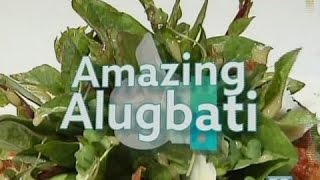 GoodNews: Amazing Alugbati!