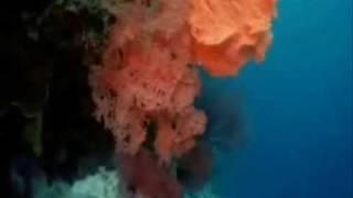 Kıyısız Deniz