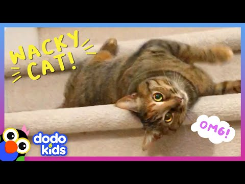 Have You Ever Seen A Cat Do THIS?   Dodo Kids