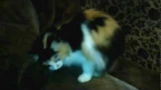 Кошка кусает свой хвост и танцует/Cat bite her tail and dance