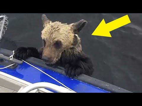 When Guy Realized Why Bears Were Climbing On His Boat, It Was Almost Too Late To Escape Alive