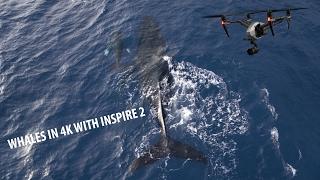 Inspire 2 - Hawaii in 4K