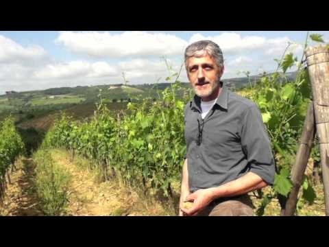 wine article Terroir of Chianti with Roberto Stucchi Reading the weeds and soil types