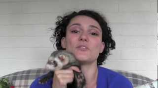 How to reduce ferret smell - www.Ferret-World.com