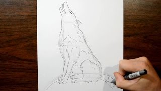 How to Draw a Howling Wolf - Real Time Drawing