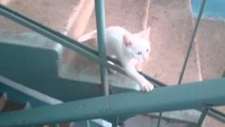 обсолютно белый голубоглазый кот тупишка :)))