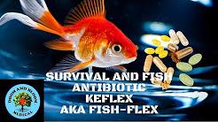 Antibiotic Keflex, FishFlex