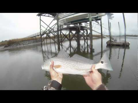 Winter Red Fish