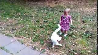 Юлиана и голубоглазая кошка