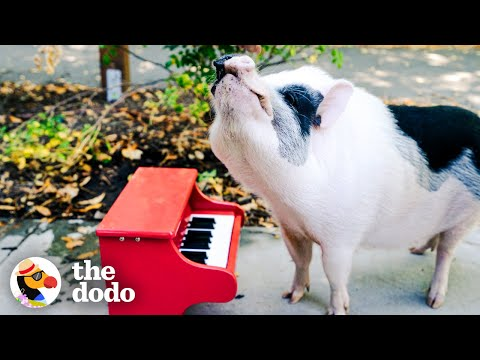 Rescue Pig Runs Wild At The Park   The Dodo Airbnb Experiences