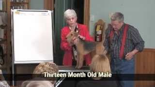 A Discussion Of The Lakeland Terrier Part 3