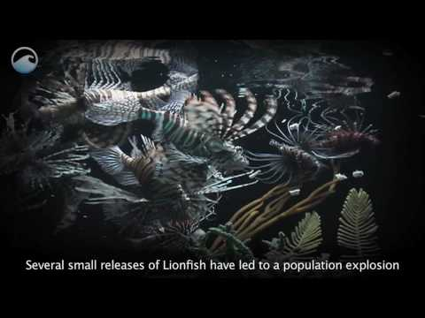Lionfish On The Loose