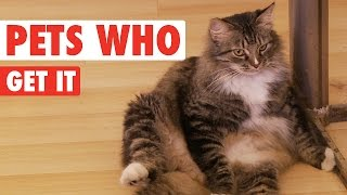 Pets Who Get It || Funny Animal Compilation