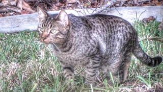 Feral Cat Documentary
