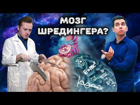 МОЗГ ШРЁДИНГЕРА: Квантовые процессы в основе нашего мышления (feat. Дмитрий Побединский)